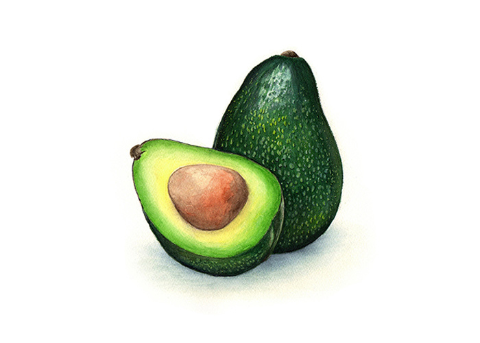 A Watercolor Painting of An Avocado