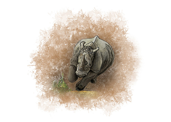 Charging Rhino