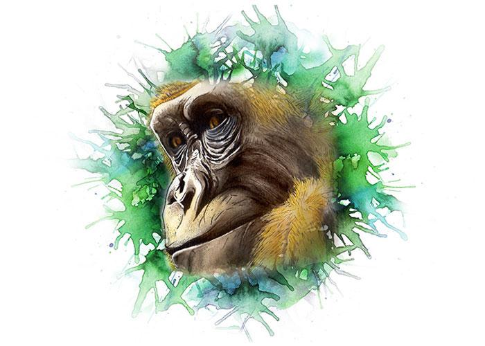 Cross River Gorilla Watercolor Portrait