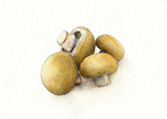 Cremini Mushrooms Watercolor Painting