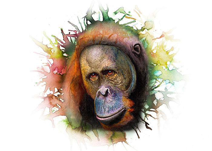 A Orangutan Watercolor Portrait