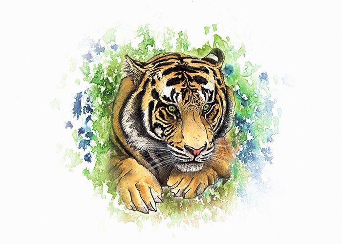 A Sumatran Tiger Watercolor Illustration