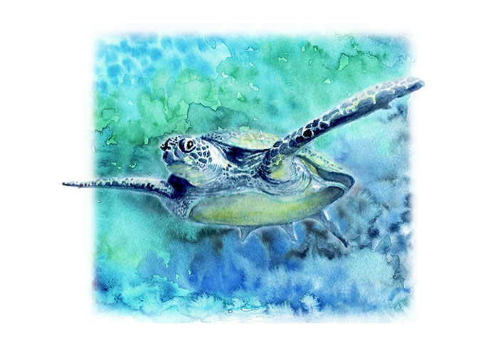 Swimming Turtle In Watercolor