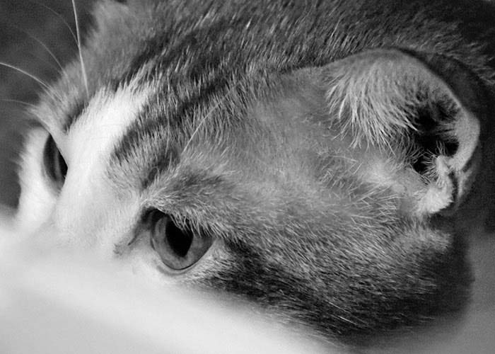 Black & White Photography : Cat