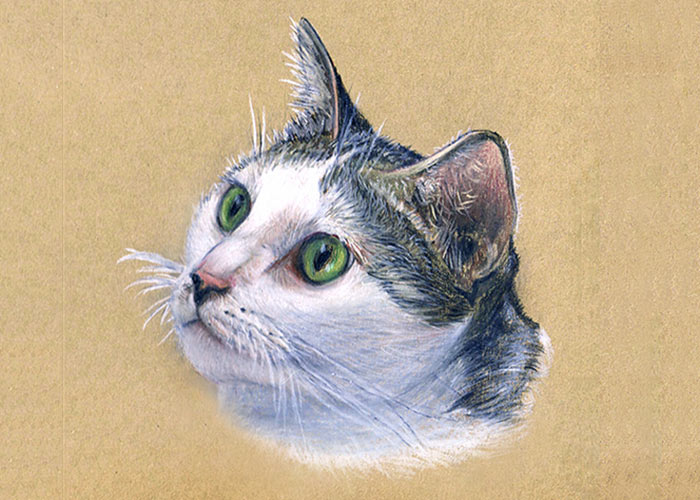 A Cat Colored Pencil Drawing