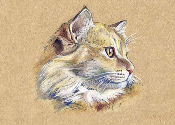 Colored pencil drawing of my mom's cat
