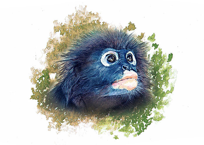 Watercolor Painting of a dusky leaf monkey