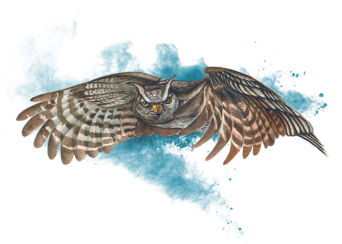 Watercolor Painting of a flying owl